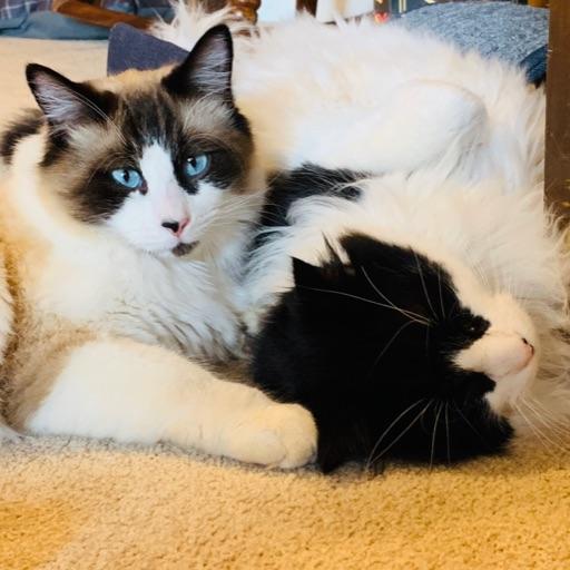 Kitten Lover
