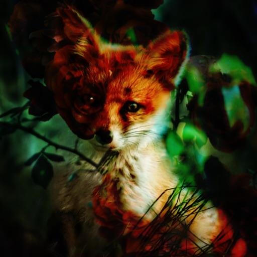 FireyFox
