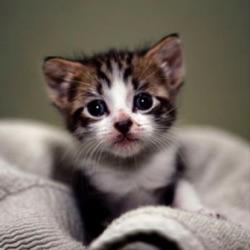 #Catsforlife