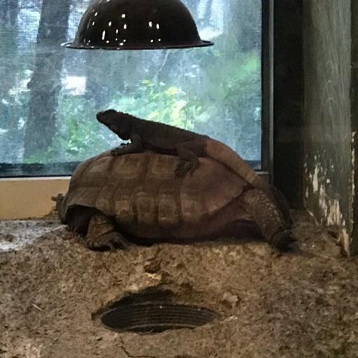 Lizard turtle girl