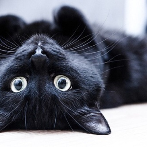 Catzz