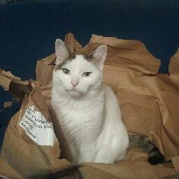Kitty Kat meow meow 😺