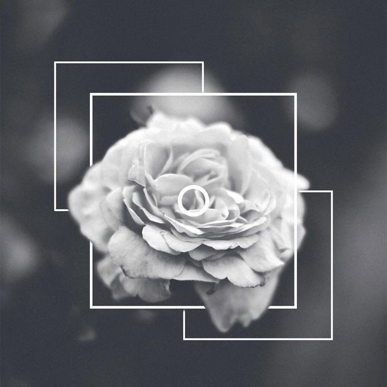 Maia_Rose