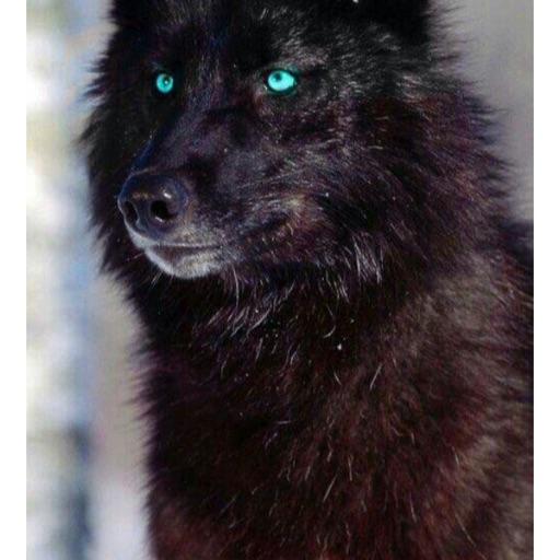 Horsewolflover_1208🐴🐺