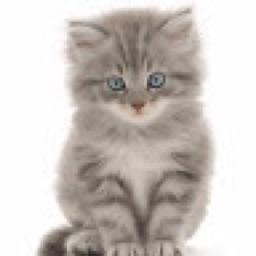KittenOMaster