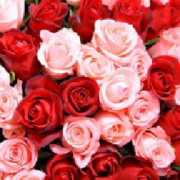 🌹Red Roses🌹