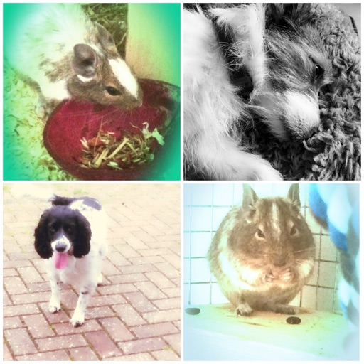 Katy.❤️dogs.Animals