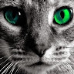 Finecat
