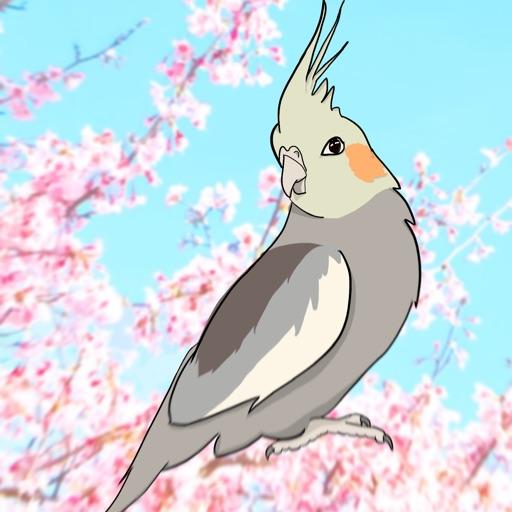 Apollo The Bird