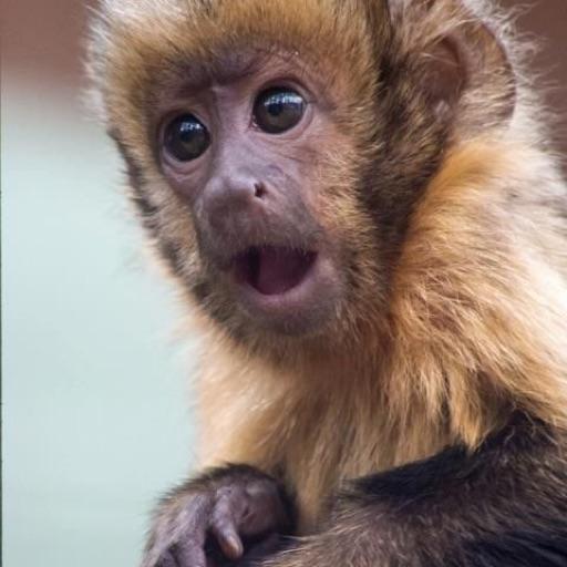 monkey 🦧