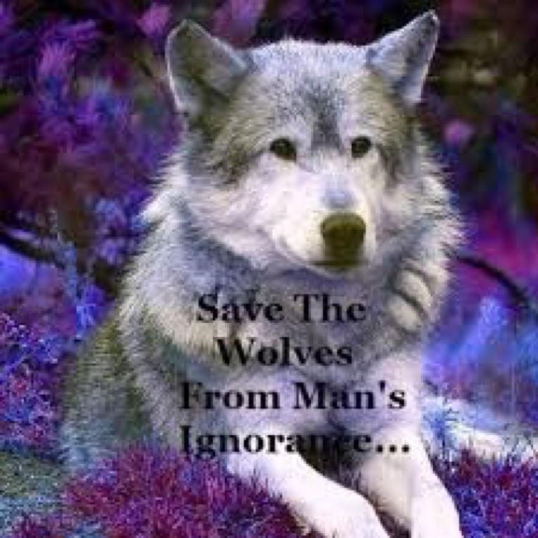 Purplewolfqueen