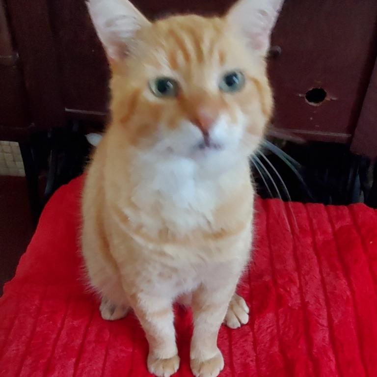CurlyJoe's mom