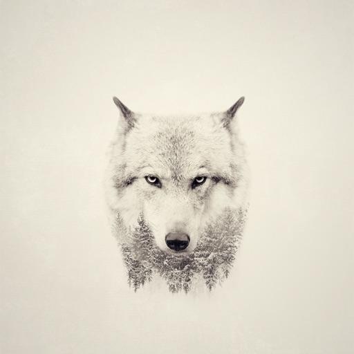 Ladywolf93 🐾