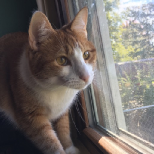 Kitten9019