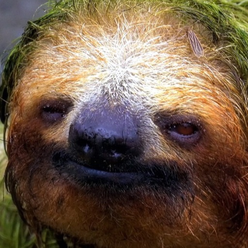 sloth_power