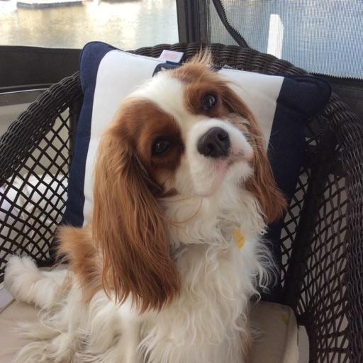 Doggyz for life 🐶🐕🐩