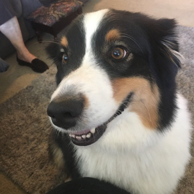 Purple.Rose