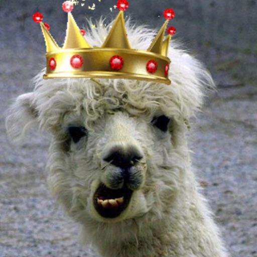 Royal Llama