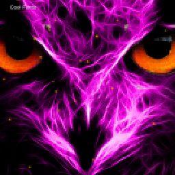 the neon owl