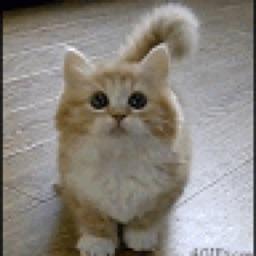 Kittycat3508