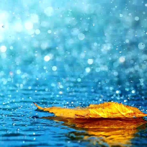 rain_drop_66