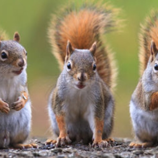 Squirrelsforlife!! ❤️