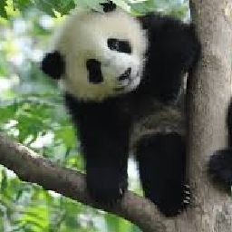 Pamboo🐼 CONTEST