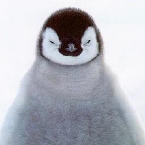 PenguinLover10550 🐧