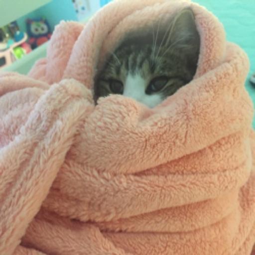 kitten_lover723