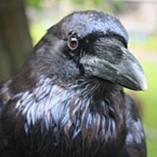 Raven lover3000