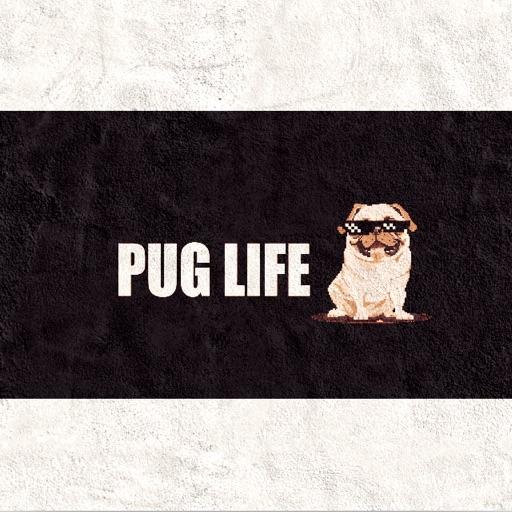 Pug Life 😎