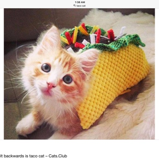 #Cats and Tacos