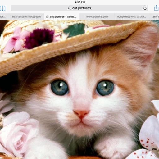 kit Kat kitty Kat🐱🐈