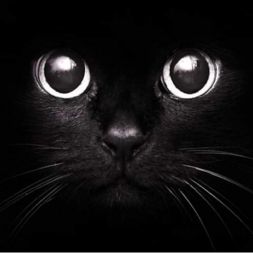 kittycatlove