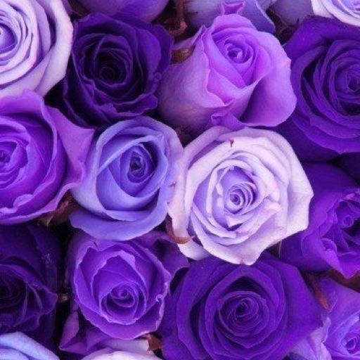 RosesAndRaindrops