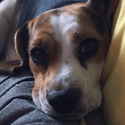 jewelpuppydog