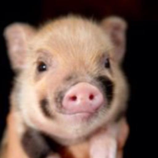 Piggy pante