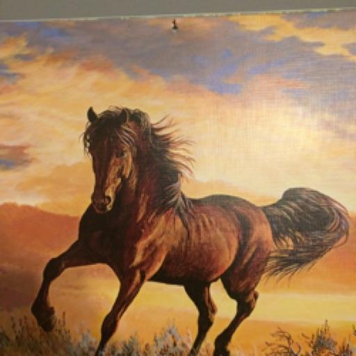horseloverrae11
