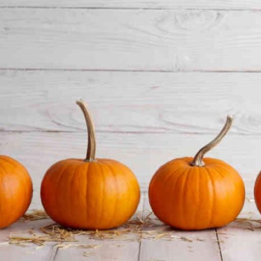 Pumpkin 🎃 Lucille