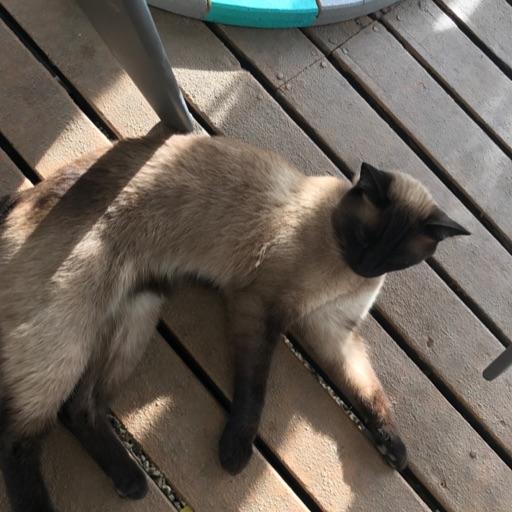 Lazy cat 🐱