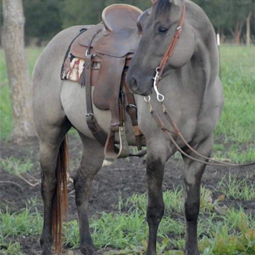 Equestrian101