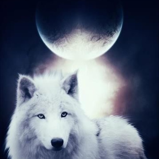 Dakota13wolf