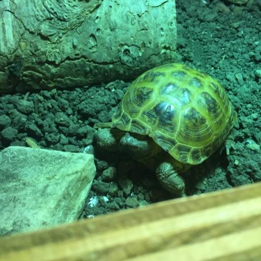 TortoiseGirl