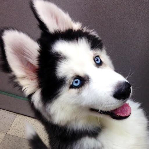 puppy_girl awesomeness