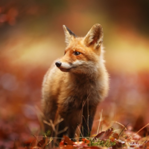 Foxybrown