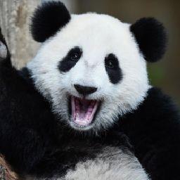 PandaArt