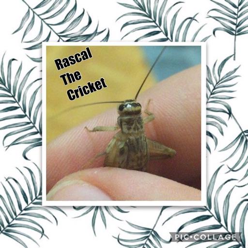 Rascal The Cricket