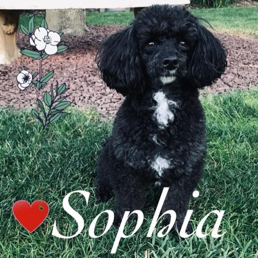 Sophia 🦋