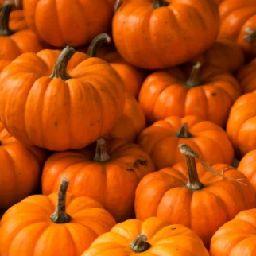 pumpkin.pie