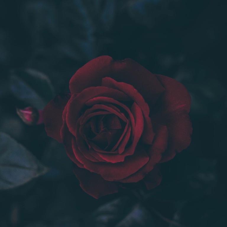 Pickled Rose